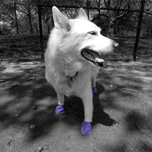 pawz dog boots how to put on