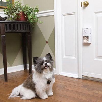 PetSafe Smart Pet Sensing Doorbell The Green Head
