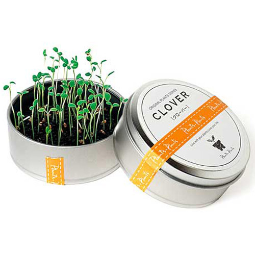 Plants in Cans Cool Mini Desktop Gardens The Green Head