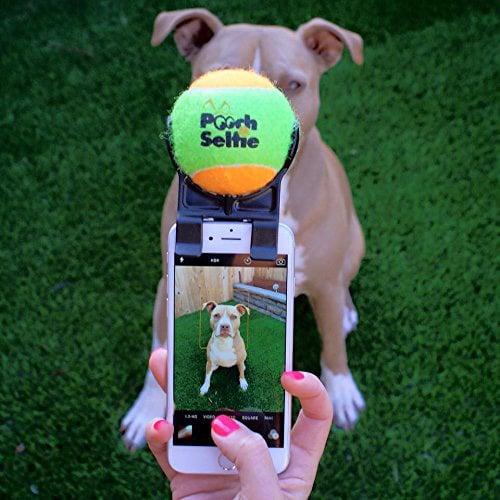 pooch selfie smartphone squeaker ball gets dog 39 s attention the green. Black Bedroom Furniture Sets. Home Design Ideas