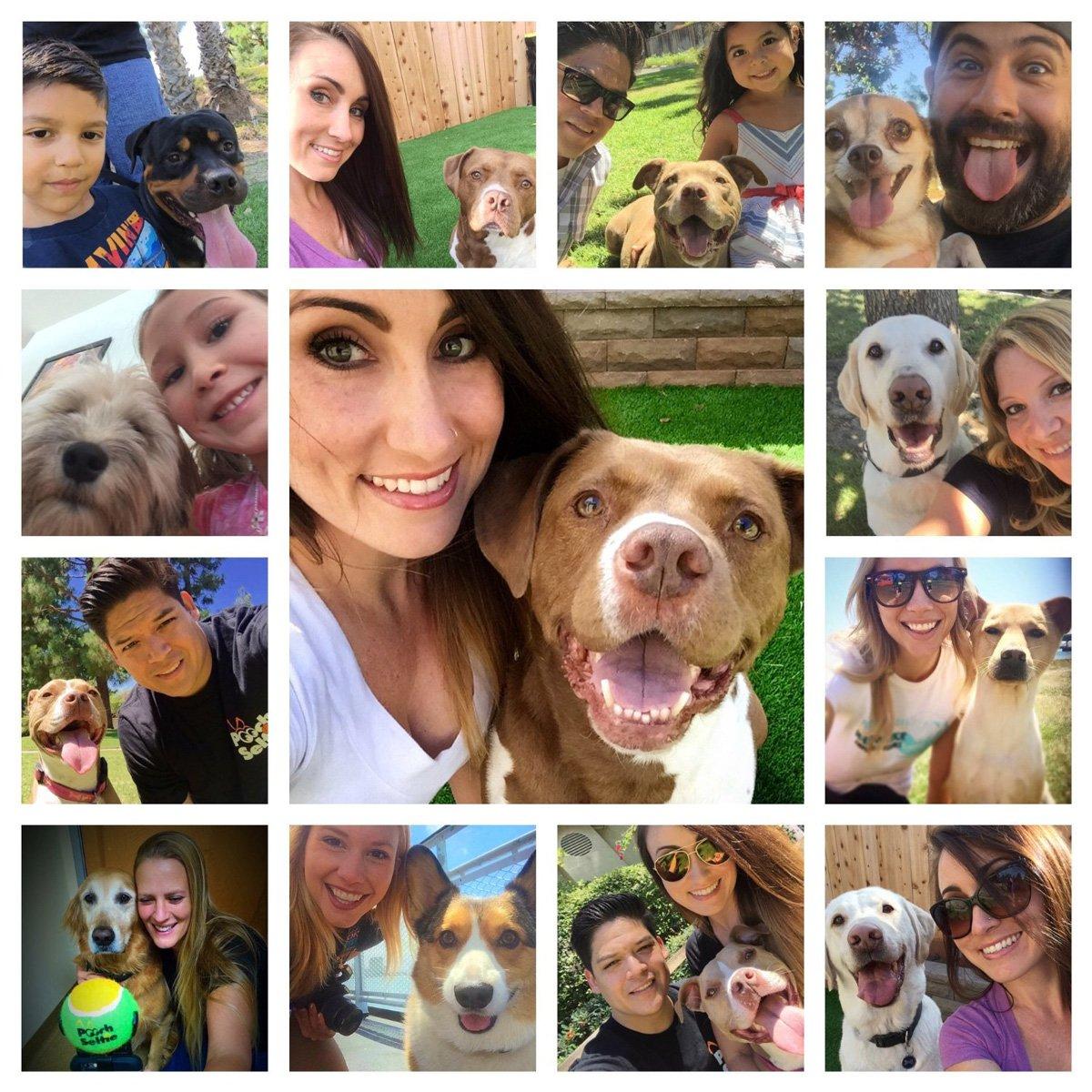 pooch selfie smartphone squeaker ball gets dog 39 s attention the green head. Black Bedroom Furniture Sets. Home Design Ideas