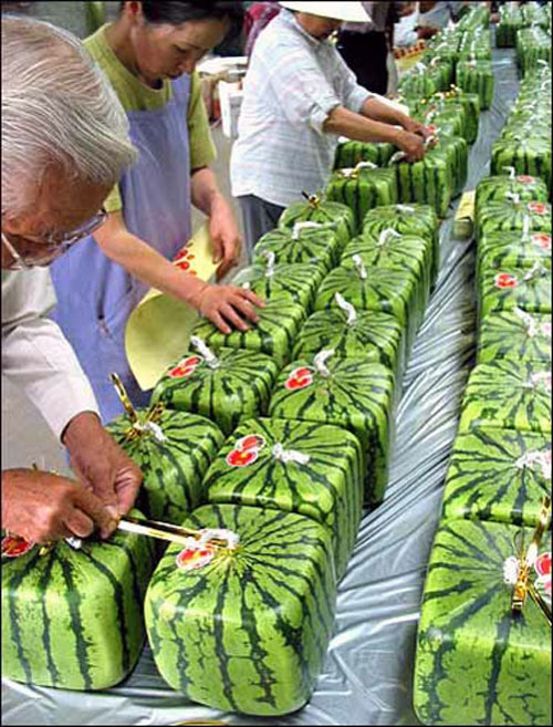 Pyramid & Square Shaped Watermelons - The Green Head