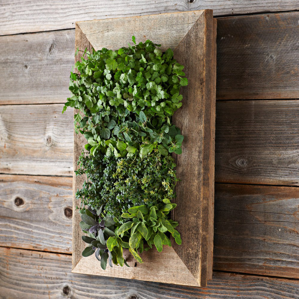 Reclaimed barn door vertical wall planter the green head - Wall mounted planters outdoor ...