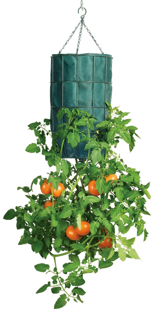 Gardener 39 s revolution upside down tomato planter the Tomato garden design