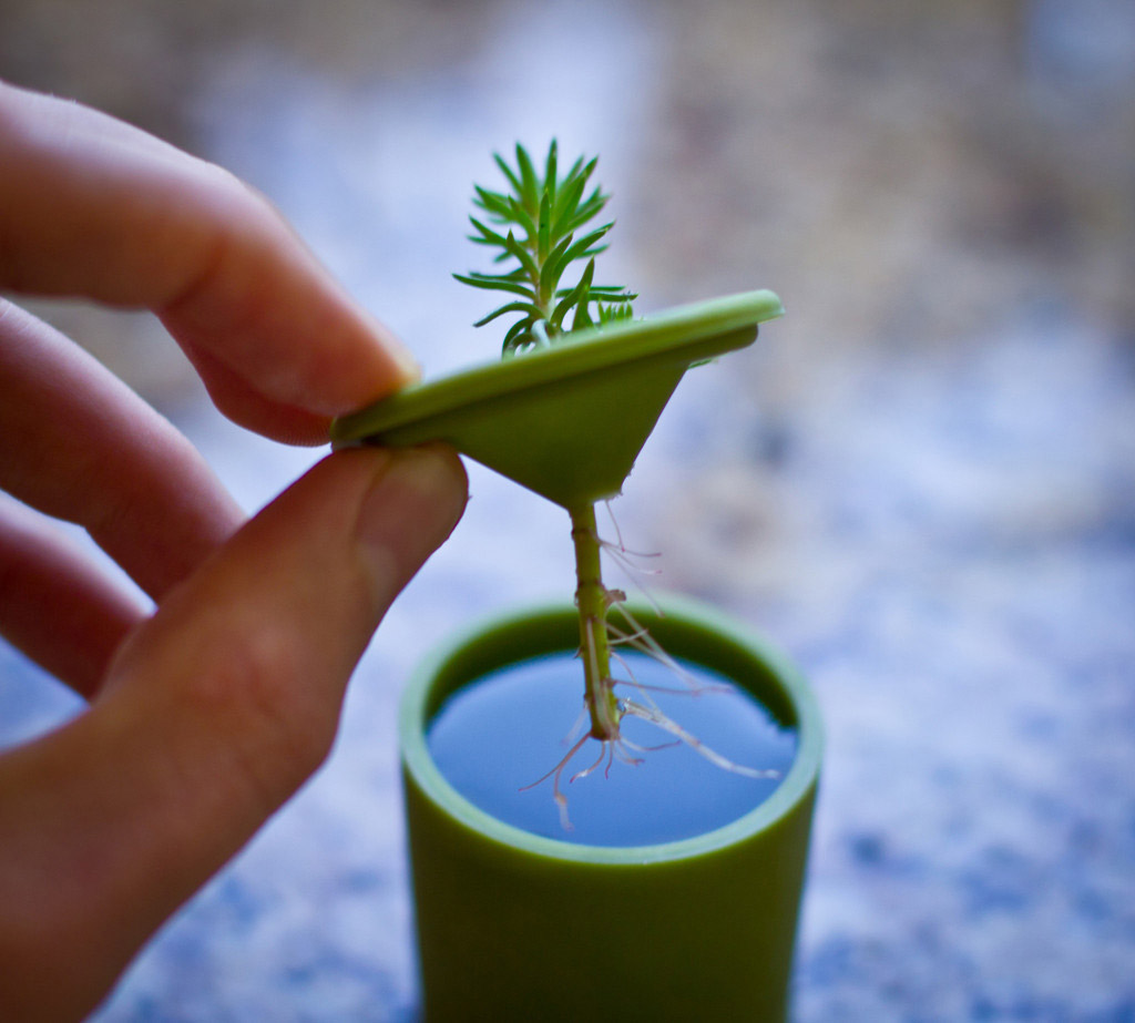 Grow New Plants From Plant Cuttings