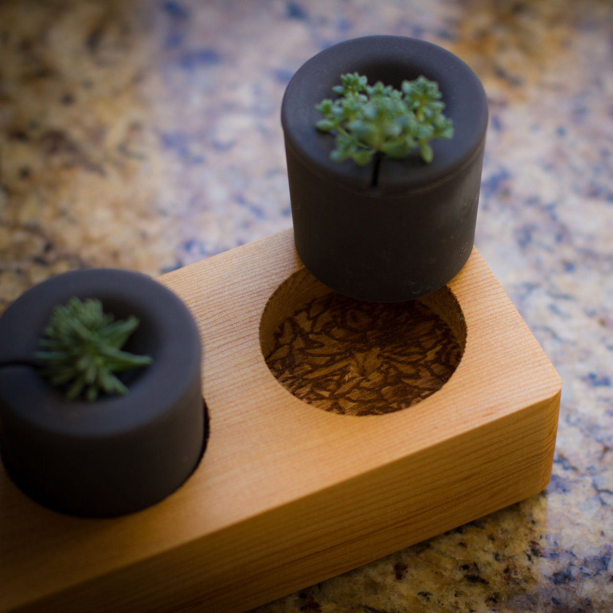 Rootcup Grow New Plants From Plant Cuttings