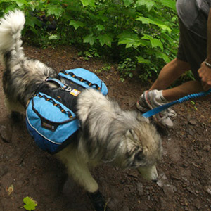 Ruff Wear Approach Pack - Saddlebag For Dogs! - The Green Head