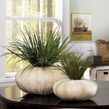 Sea Urchin Vases The Green Head