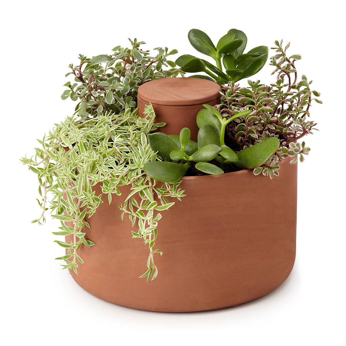self watering herb and succulent planter the green head. Black Bedroom Furniture Sets. Home Design Ideas