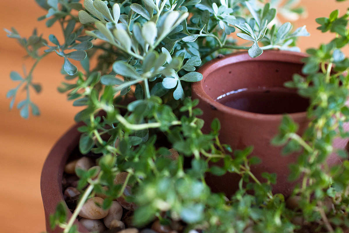 Self watering herb and succulent planter the green head Planters for succulents