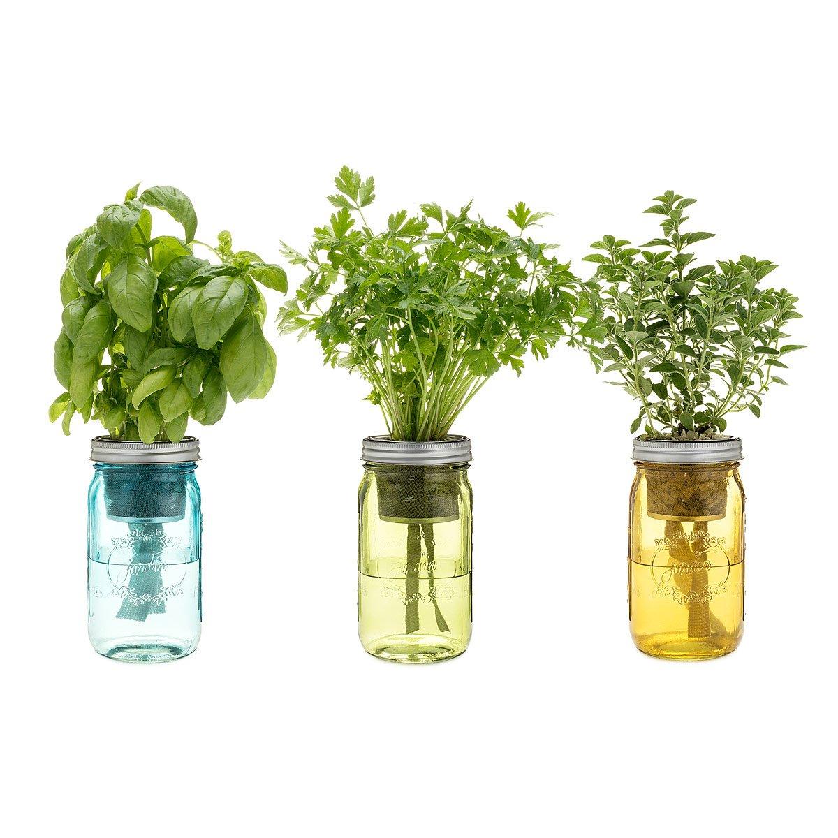 Self Watering Mason Jar Indoor Herb Garden The Green Head