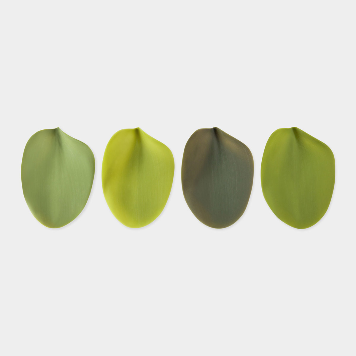 Silicone Leaf Plates The Green Head