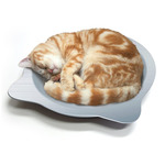 Cat Cooling Tray