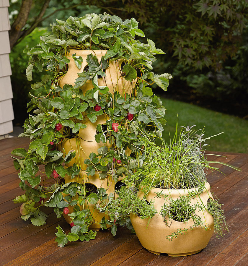 Herb Planters Mesmerizing With Strawberry Pot Herb Planter Pictures