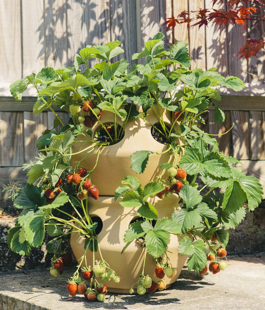 Herb Planters Impressive Of Strawberry and Stackable Herb Planters Image