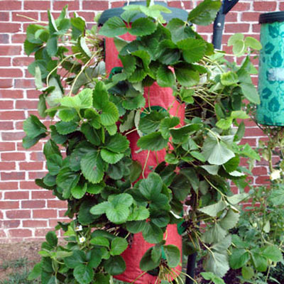 Strawberry Tree Vertical Hanging Grow Bag