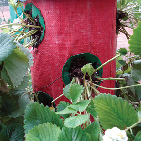 Strawberry Tree Vertical Hanging Grow Bag The Green Head
