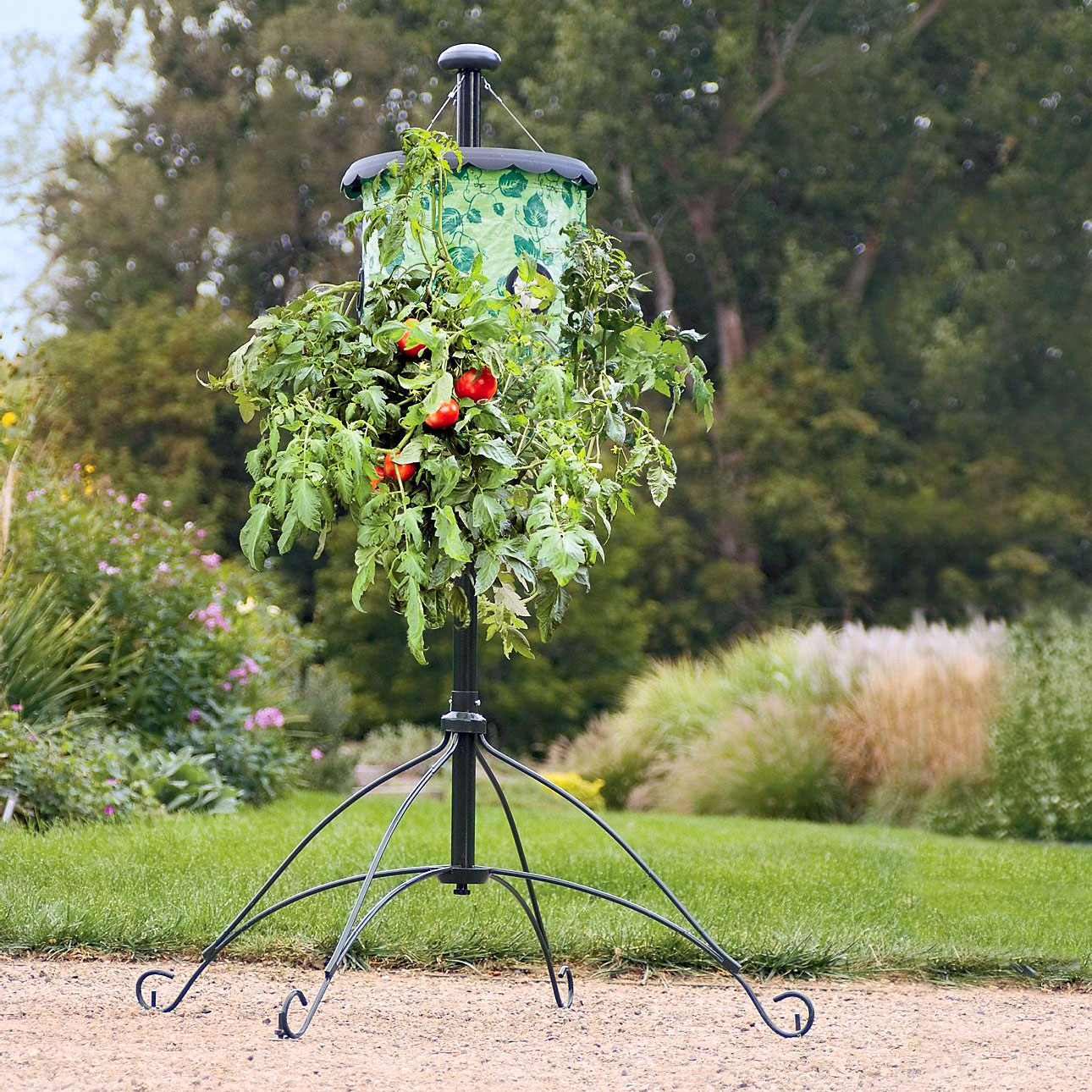 Super size topsy turvy upside down tomato tree the green head - Upside down gardening ...