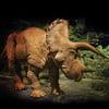 20 Foot Animatronic Triceratops