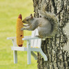 Adirondack Chair Squirrel Feeder