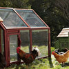 Alexandria Chicken Coop and Run