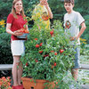 All-in-One Tomato Success Kit