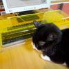 Anti-Cat Keyboard Cover