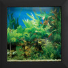 Aquavista - Wall Mounted Aquarium