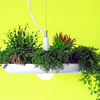 Babylon Light - Hanging Garden Light Fixture