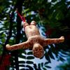 Bungee Bird Feeder - Bungee Jumping Man Made From Bird Food
