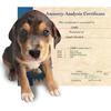 Canine Genealogy Kit