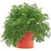 Carrot Grow Bag