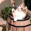 Cat Barrel Playhouse