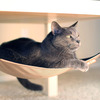 Cat Crib - Cat Hammock For Chairs