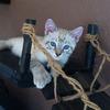 Cat Rope Bridge