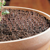 Cat Scat Mats for Houseplants and Gardens