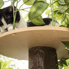 CatHaven - Cat Climbing Tree With Leaves