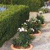 Circular Terra Cotta Plant Surrounds