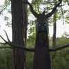 Deadly Roots - Giant Animatronic Haunted Tree