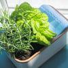 DewPlanter - Water Generating Planter