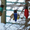 Festive Holiday String Light Bird Feeder