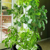 Foody 12 - Vertical Hydroponic Garden Tower