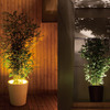 Forestarium - Illuminated Planter