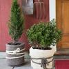 GardenWool - Stylish Winter Plant Blankets