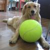 Giant Basketball-Sized Tennis Ball