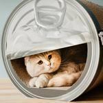 Giant Empty Can Cardboard Cat Scratcher