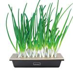 Hamama Green Onion Kit - ReGrow Green Onions in Days With Ease