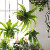 Hanging Fern Garden