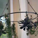 Hanging Herb Drying Rack - Preserve Fresh Herbs, Flowers, Hot Peppers, Garlic, and More