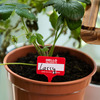 HELLO my name is... Plant Name Badges